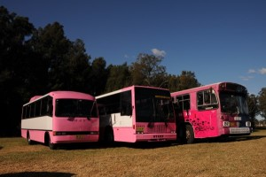 Pink Party Buses